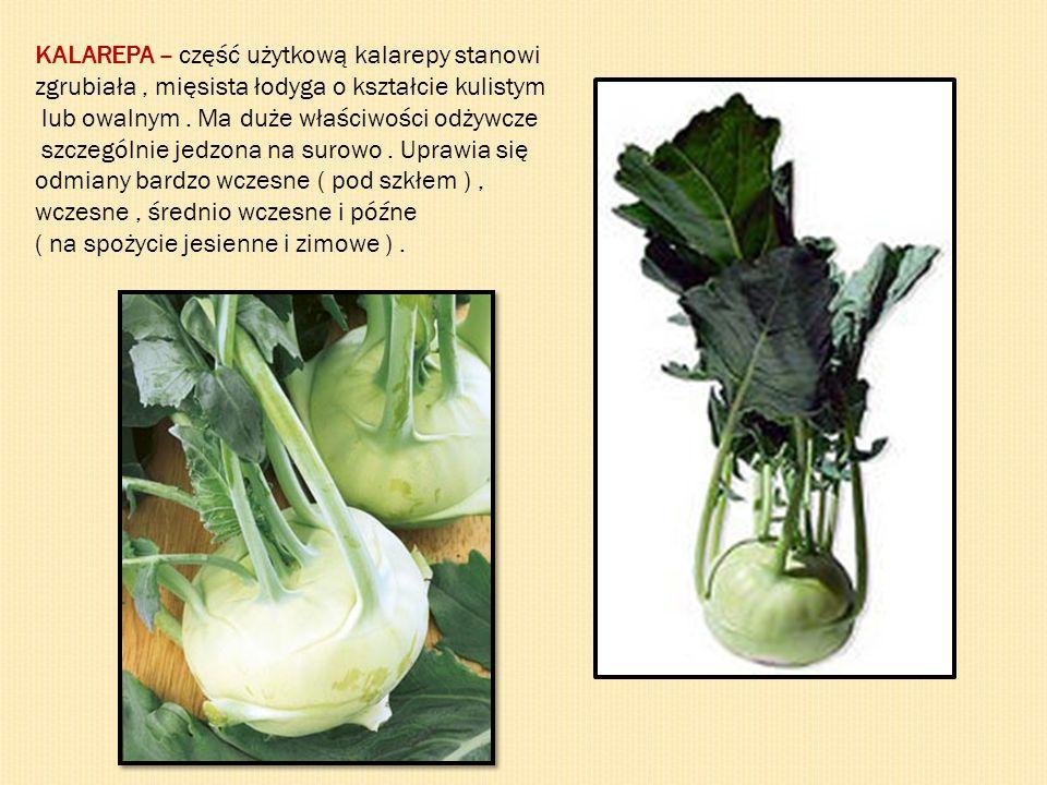 KALAREPA – część użytkową kalarepy stanowi