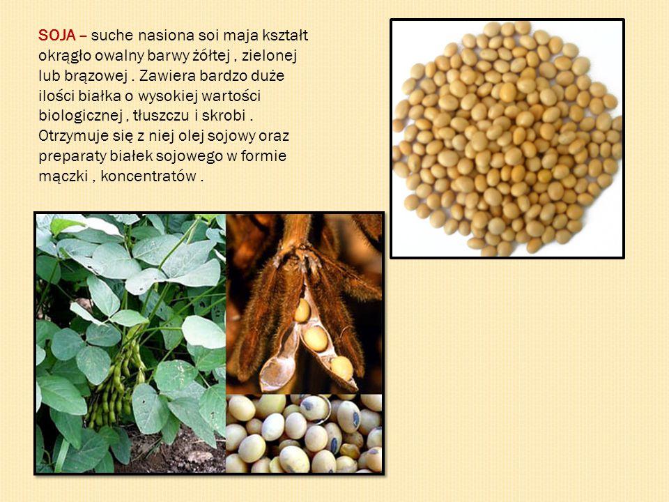 SOJA – suche nasiona soi maja kształt
