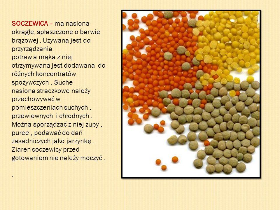 SOCZEWICA – ma nasiona okrągłe, spłaszczone o barwie brązowej