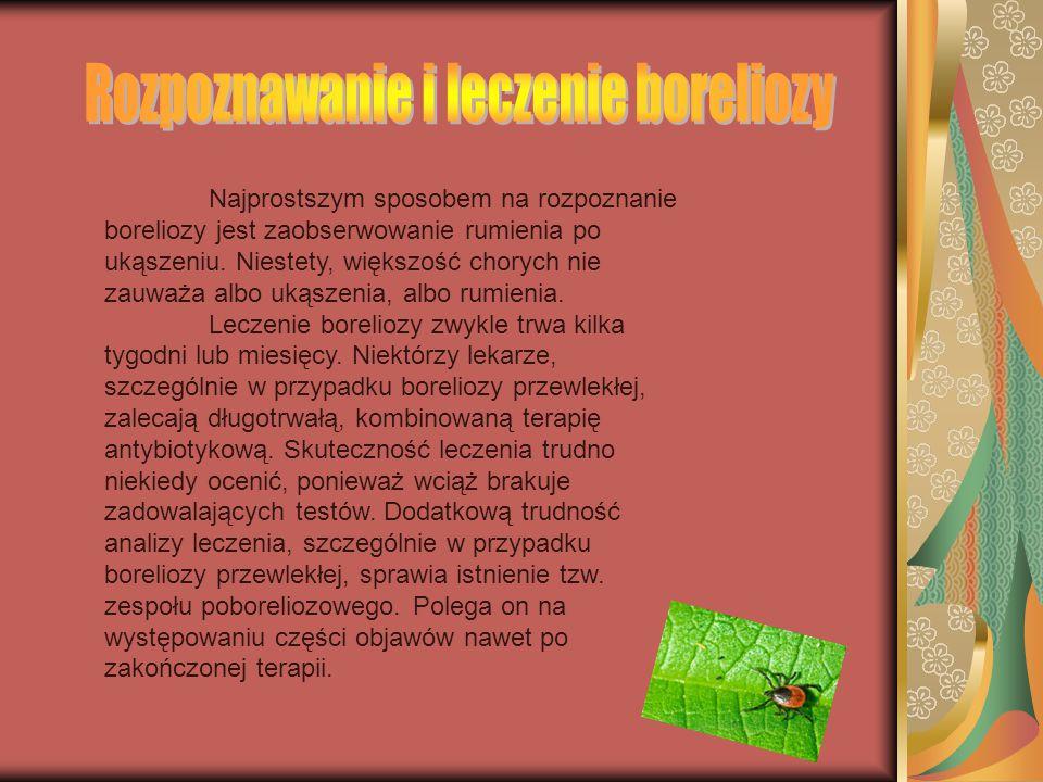 Rozpoznawanie i leczenie boreliozy