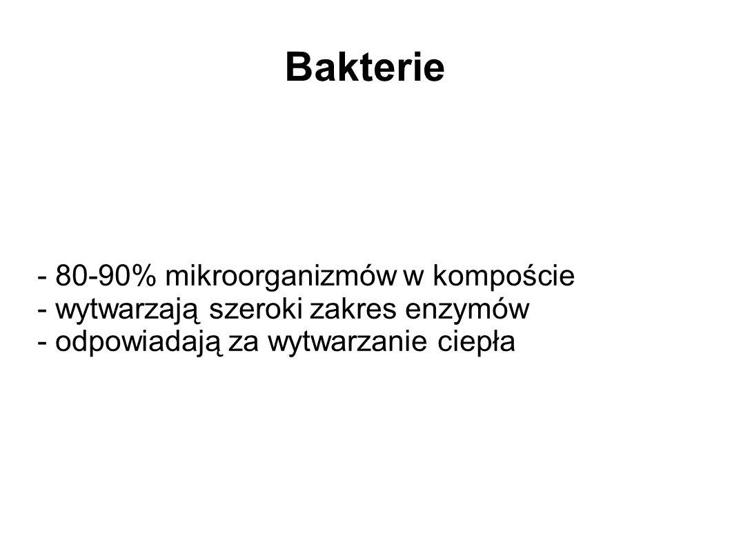 Bakterie - 80-90% mikroorganizmów w kompoście