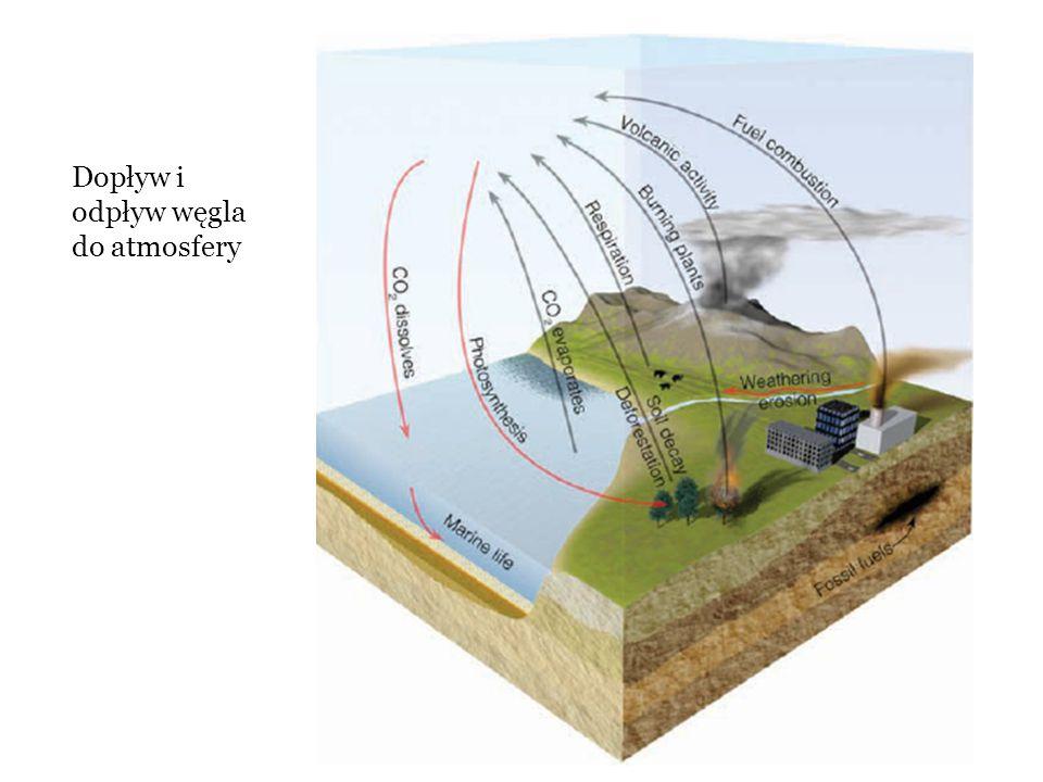 Dopływ i odpływ węgla do atmosfery