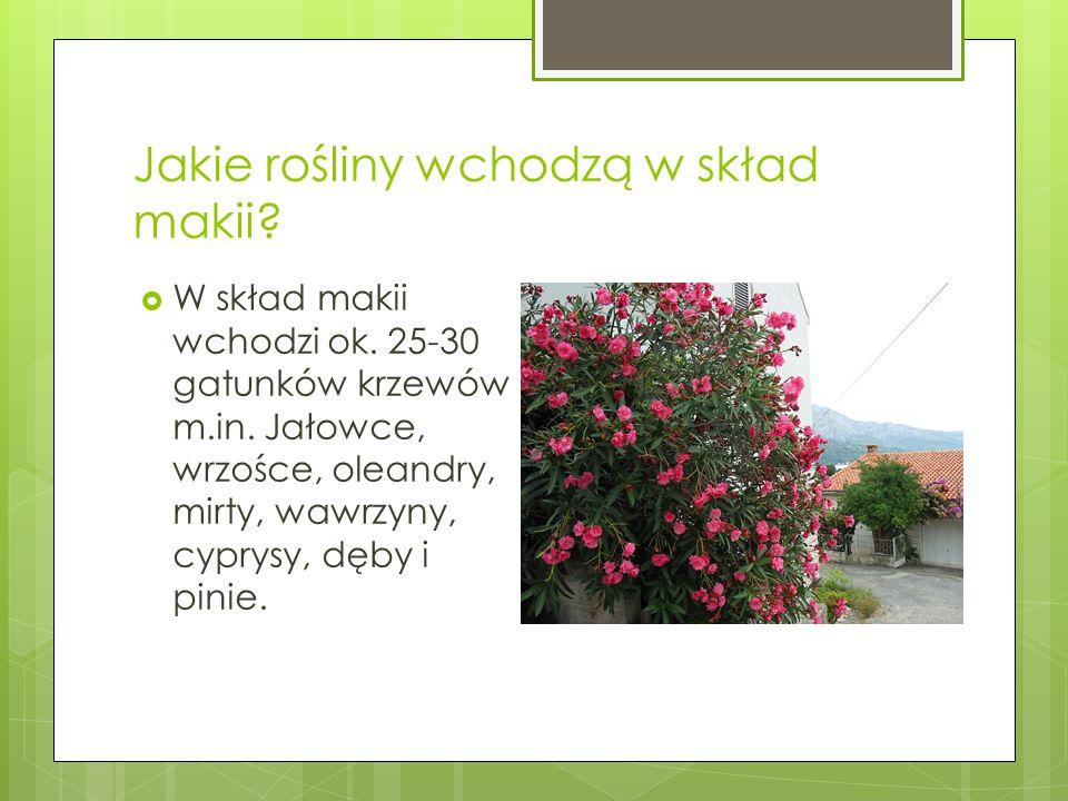 Jakie rośliny wchodzą w skład makii