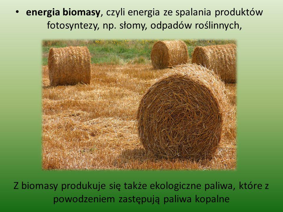 energia biomasy, czyli energia ze spalania produktów fotosyntezy, np