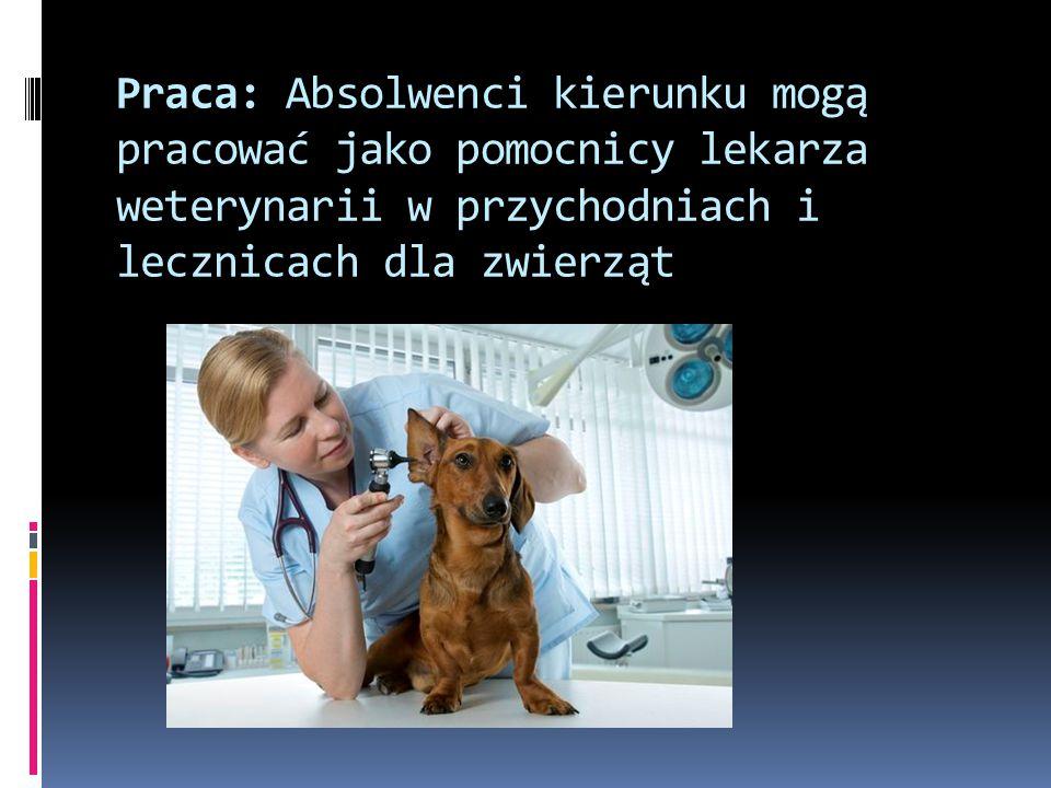 Praca: Absolwenci kierunku mogą pracować jako pomocnicy lekarza weterynarii w przychodniach i lecznicach dla zwierząt