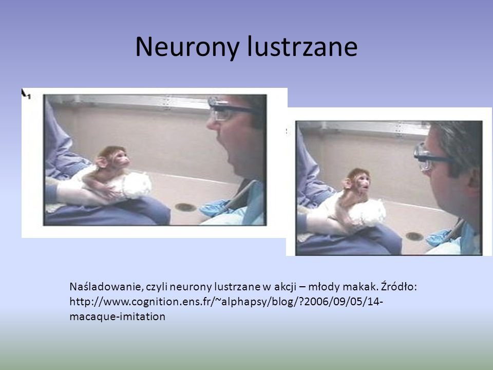 Neurony lustrzane