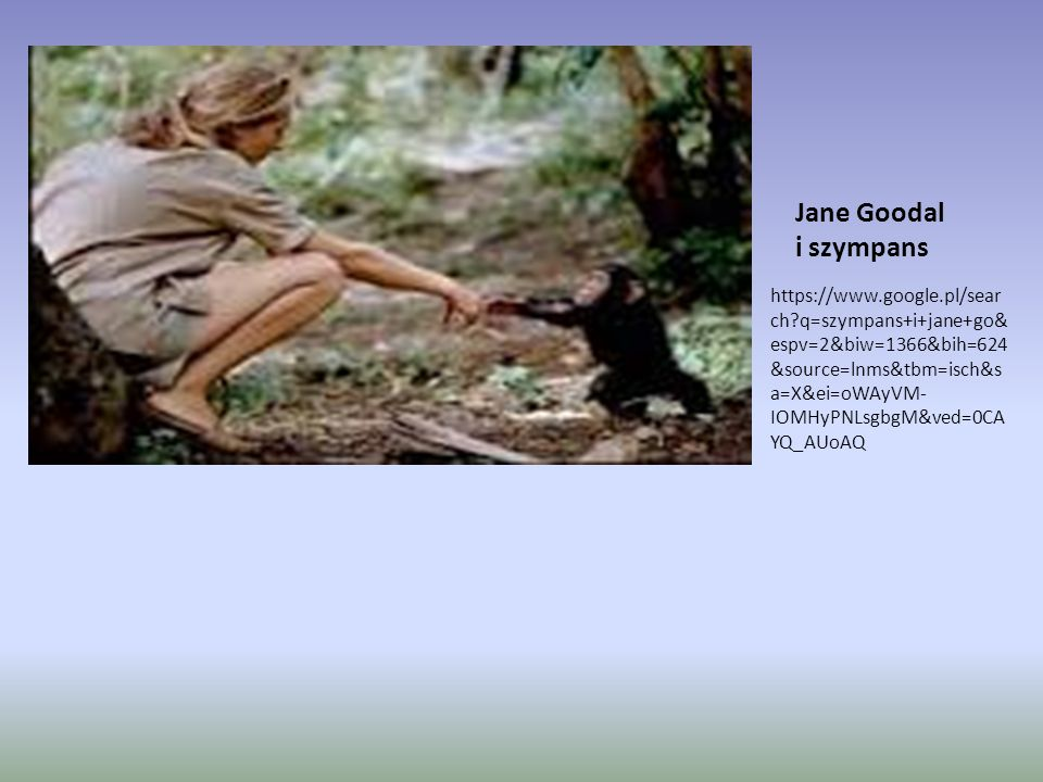 Jane Goodal i szympans