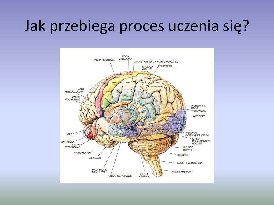 Jak przebiega proces uczenia się