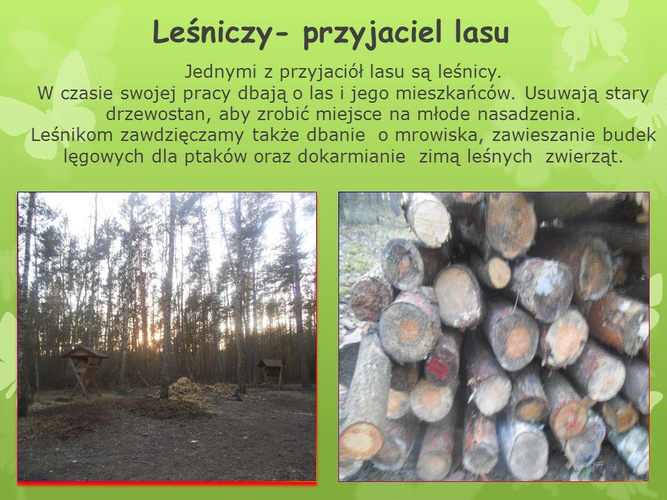 Leśniczy- przyjaciel lasu