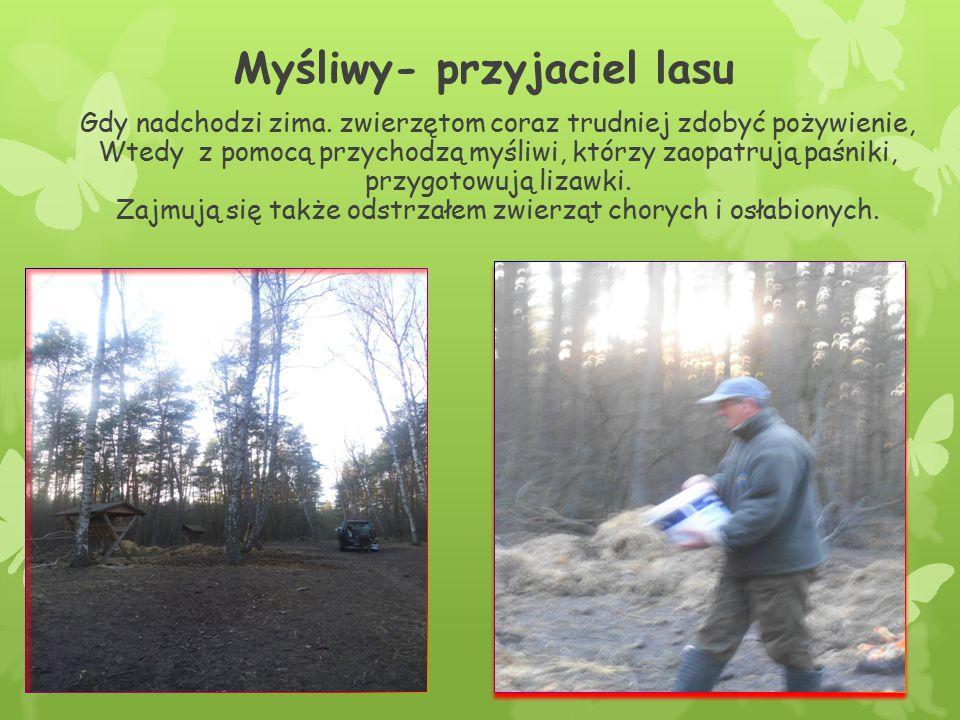 Myśliwy- przyjaciel lasu