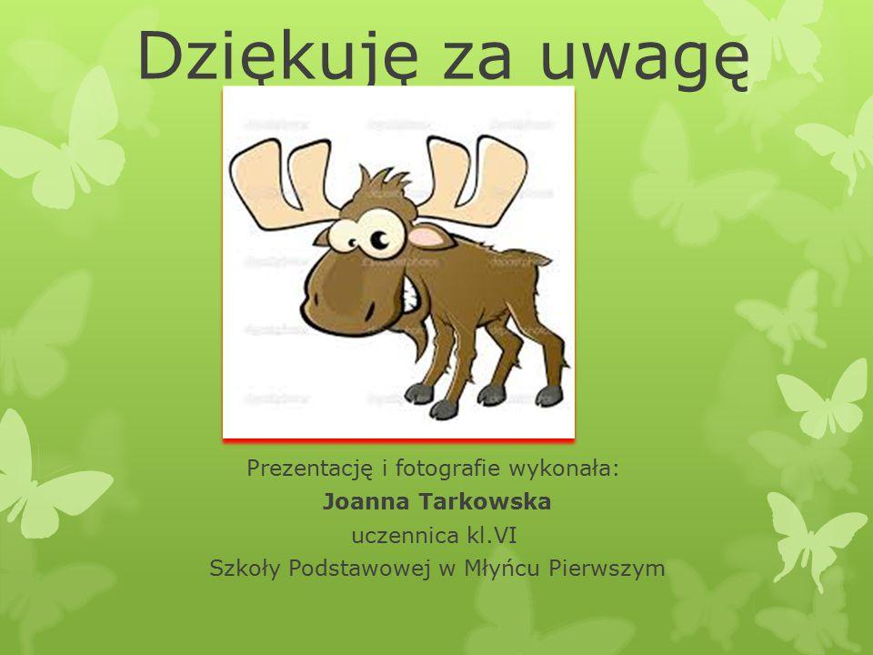 Dziękuję za uwagę Prezentację i fotografie wykonała: Joanna Tarkowska uczennica kl.VI Szkoły Podstawowej w Młyńcu Pierwszym
