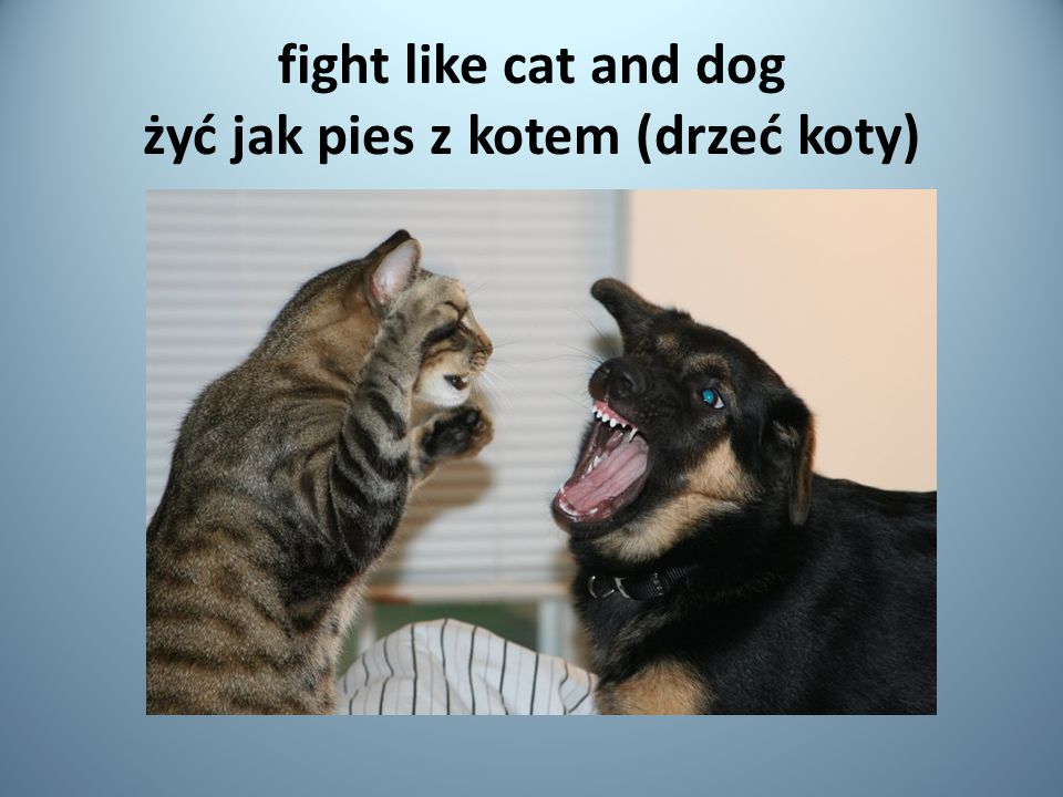 fight like cat and dog żyć jak pies z kotem (drzeć koty)
