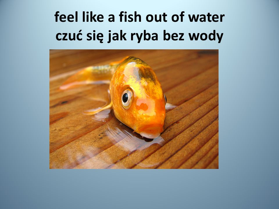 feel like a fish out of water czuć się jak ryba bez wody