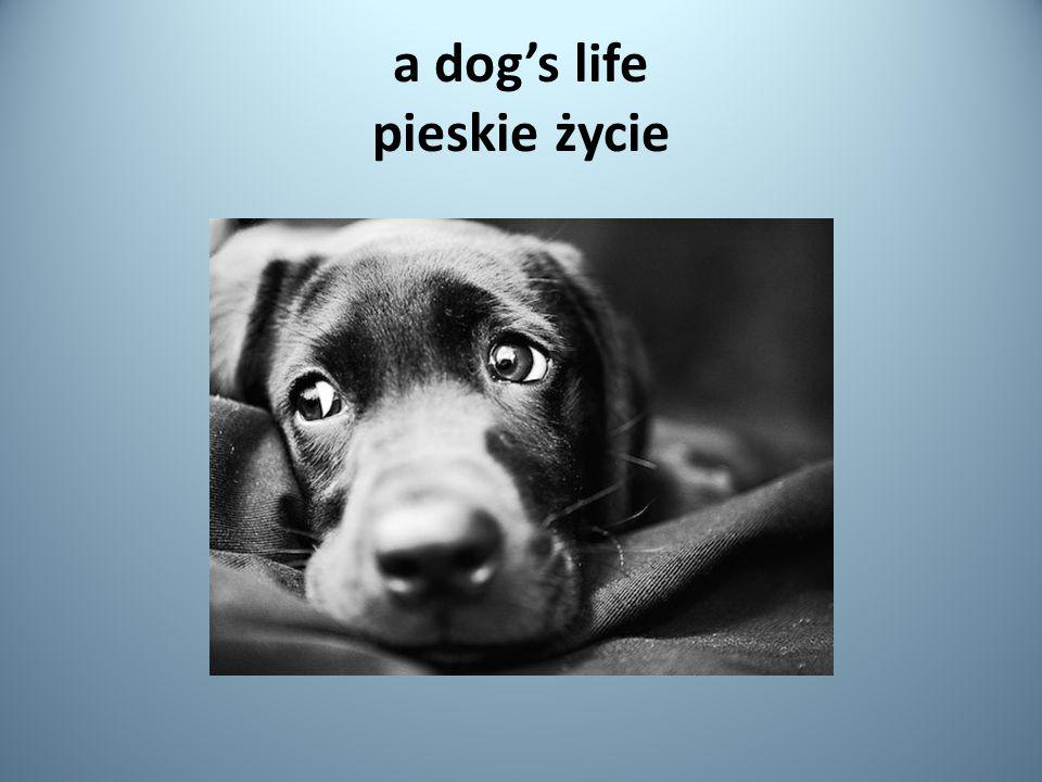 a dog's life pieskie życie