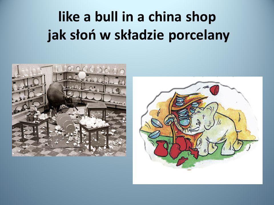 like a bull in a china shop jak słoń w składzie porcelany