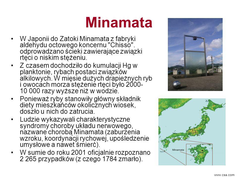 Minamata W Japonii do Zatoki Minamata z fabryki aldehydu octowego koncernu Chisso . odprowadzano ścieki zawierające związki rtęci o niskim stężeniu.