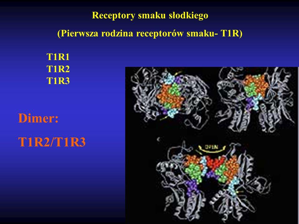 Receptory smaku słodkiego (Pierwsza rodzina receptorów smaku- T1R)