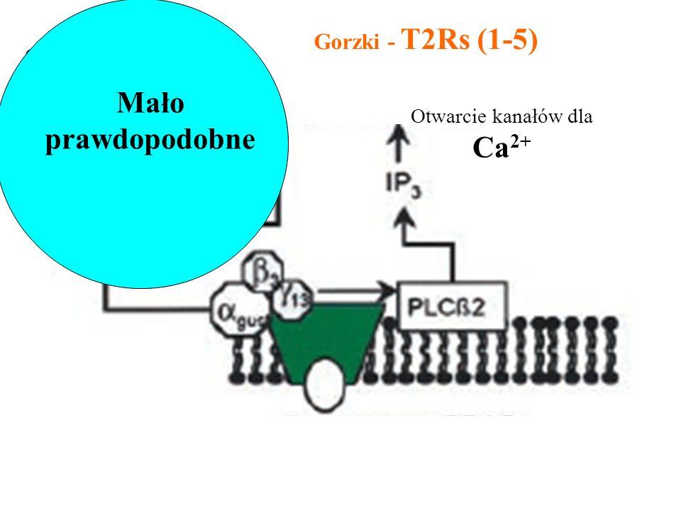 Mało prawdopodobne Gorzki - T2Rs (1-5)