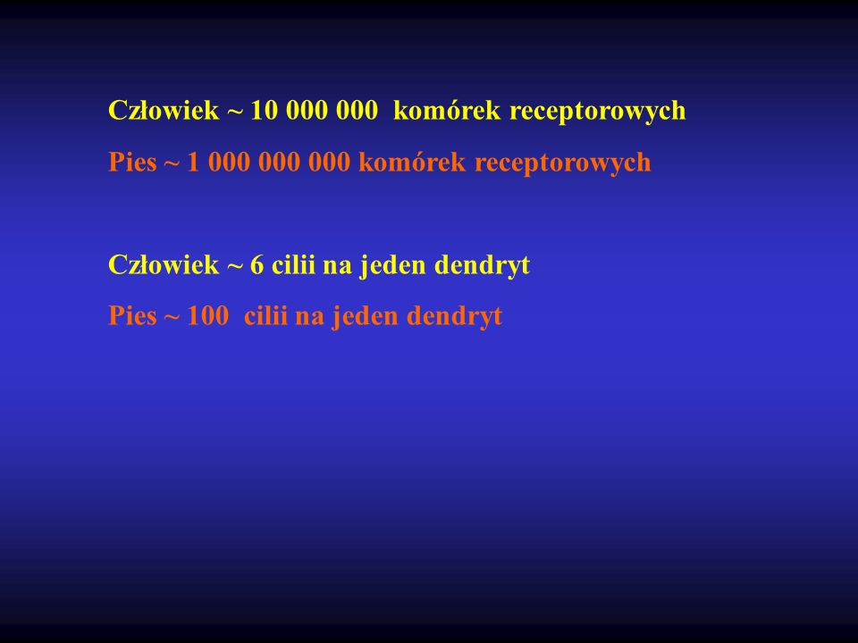 Człowiek ~ 10 000 000 komórek receptorowych