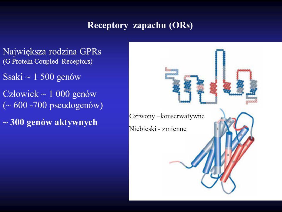 Receptory zapachu (ORs)