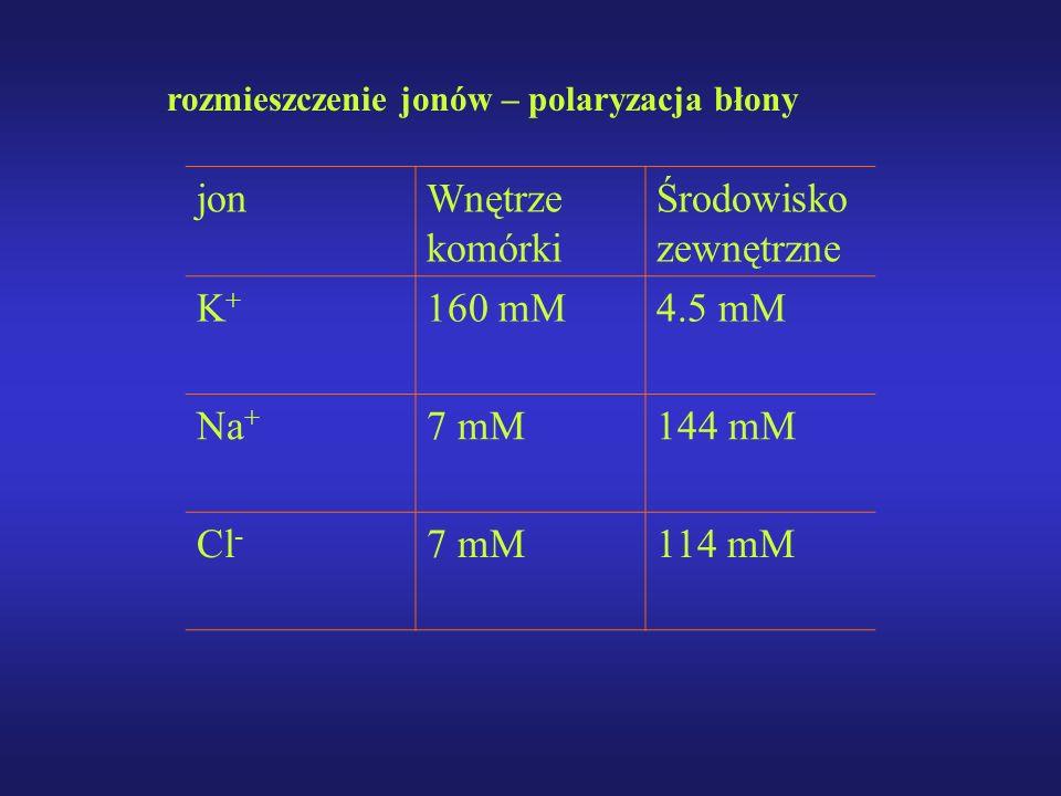 rozmieszczenie jonów – polaryzacja błony