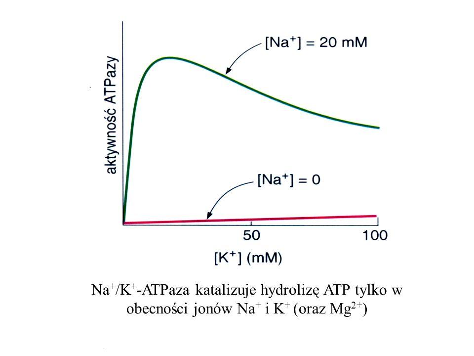 Na+/K+-ATPaza katalizuje hydrolizę ATP tylko w obecności jonów Na+ i K+ (oraz Mg2+)