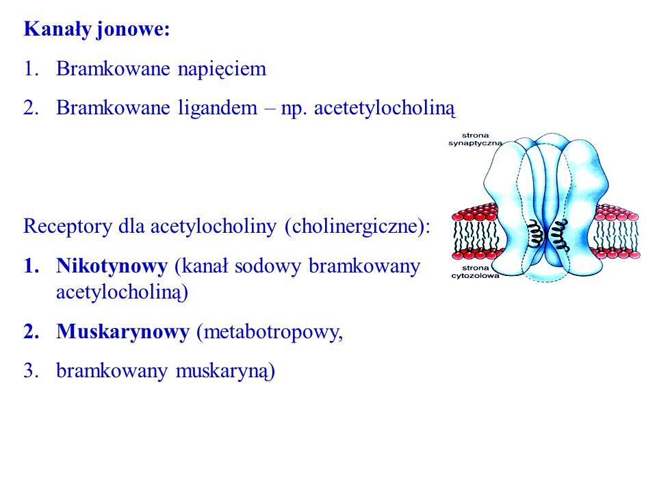 Kanały jonowe: Bramkowane napięciem. Bramkowane ligandem – np. acetetylocholiną. Receptory dla acetylocholiny (cholinergiczne):