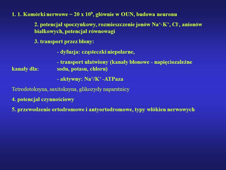 1. 1. Komórki nerwowe ~ 20 x 109, głównie w OUN, budowa neuronu