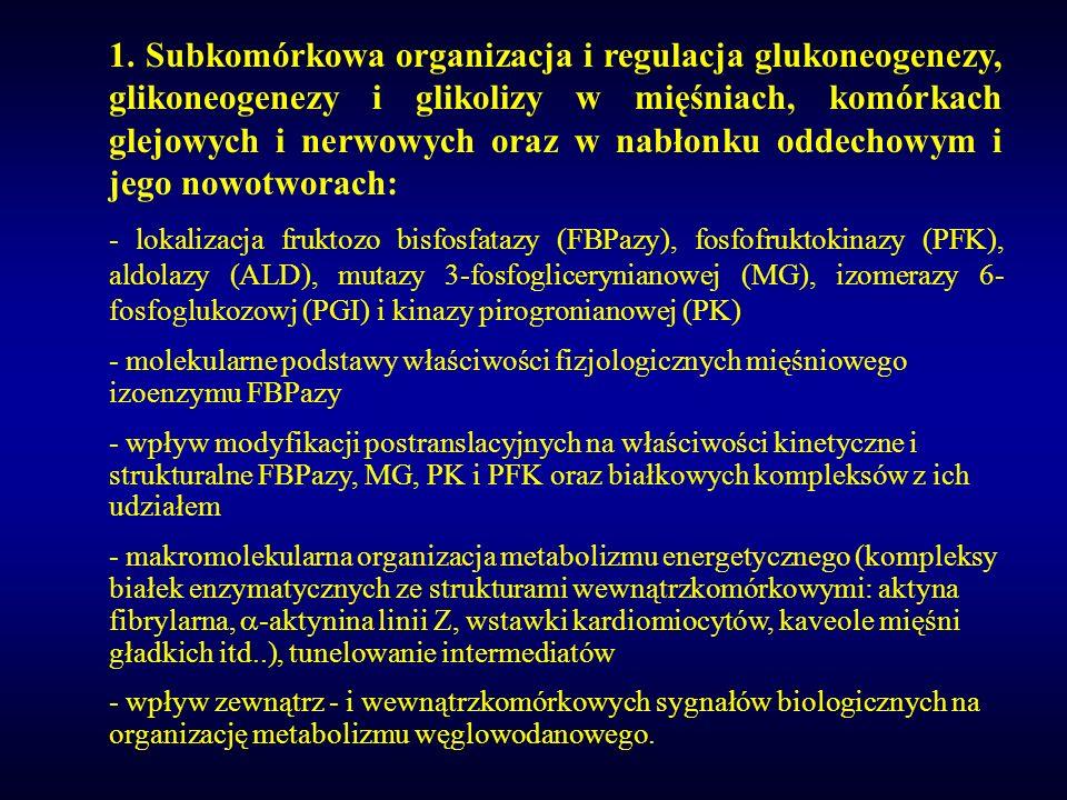 1. Subkomórkowa organizacja i regulacja glukoneogenezy, glikoneogenezy i glikolizy w mięśniach, komórkach glejowych i nerwowych oraz w nabłonku oddechowym i jego nowotworach: