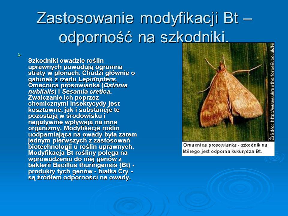 Zastosowanie modyfikacji Bt – odporność na szkodniki.