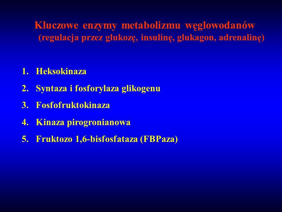 Kluczowe enzymy metabolizmu węglowodanów (regulacja przez glukozę, insulinę, glukagon, adrenalinę)