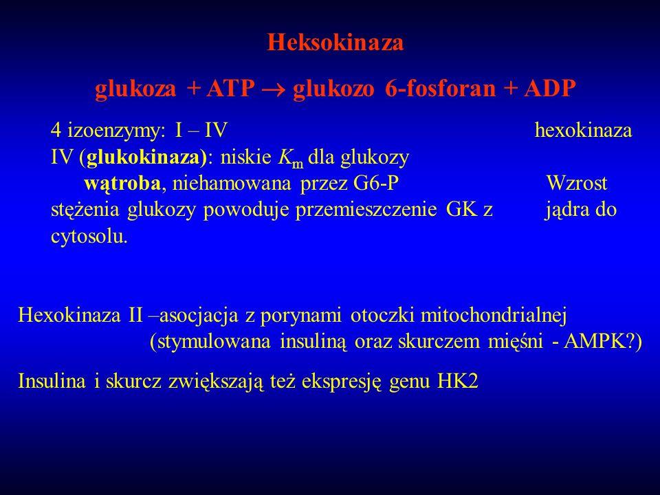 glukoza + ATP  glukozo 6-fosforan + ADP