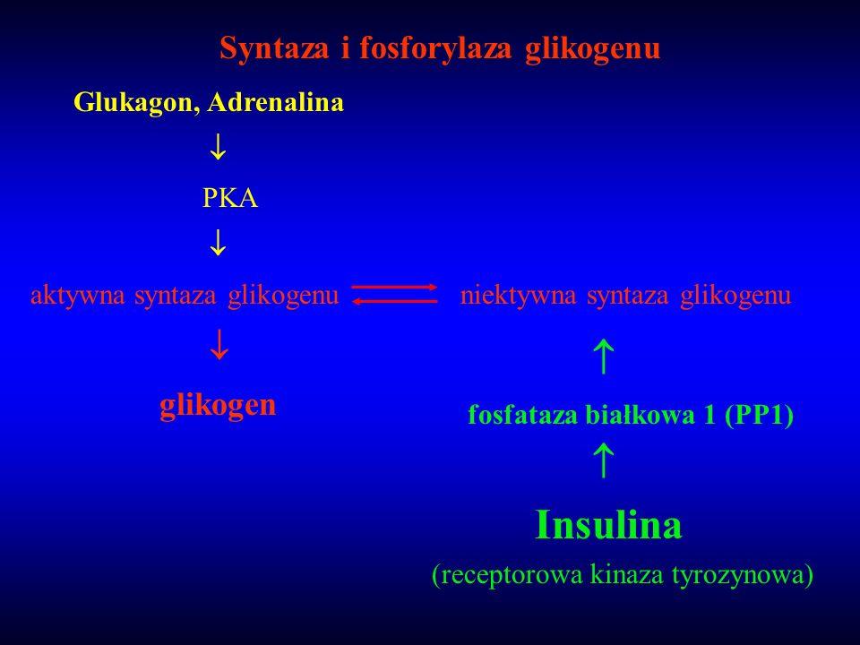 Syntaza i fosforylaza glikogenu