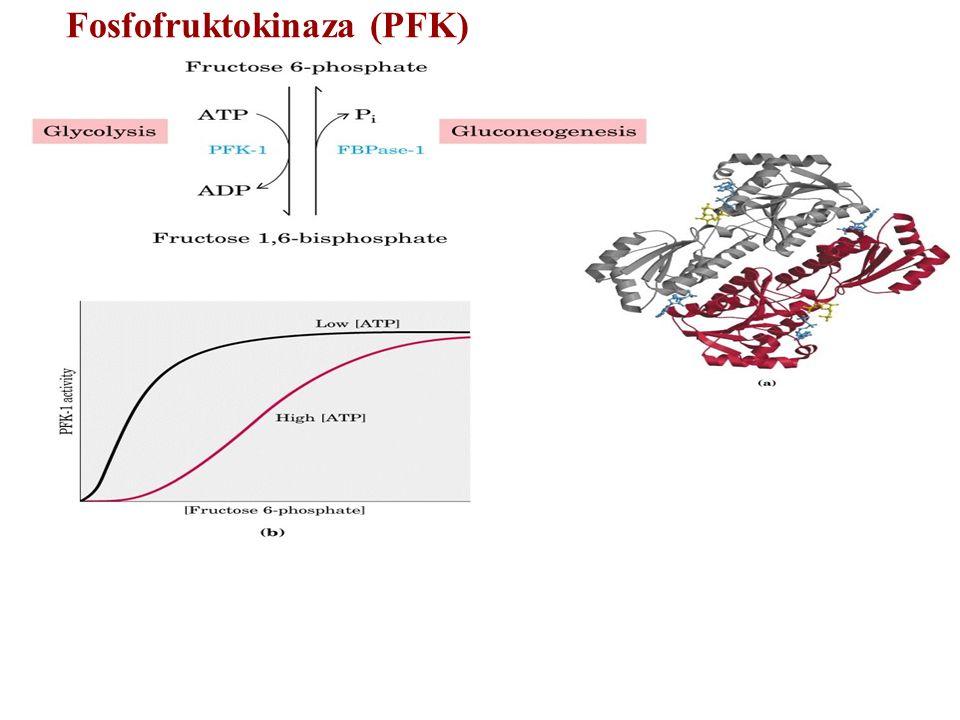 Fosfofruktokinaza (PFK)