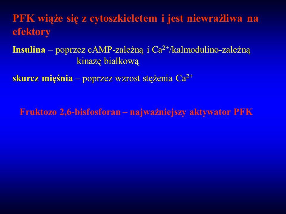 PFK wiąże się z cytoszkieletem i jest niewrażliwa na efektory