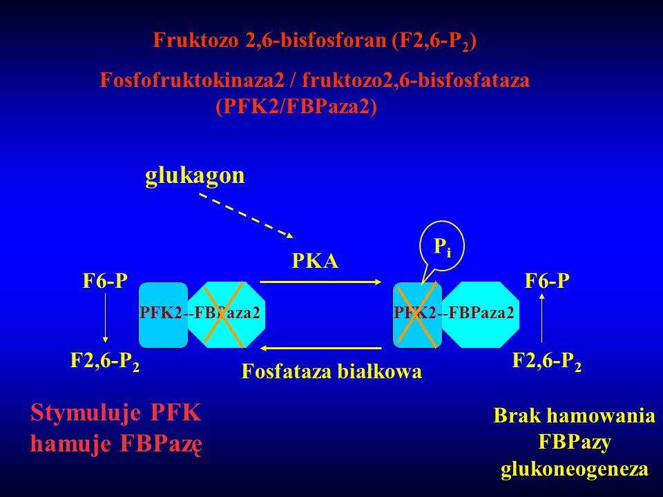 Stymuluje PFK hamuje FBPazę