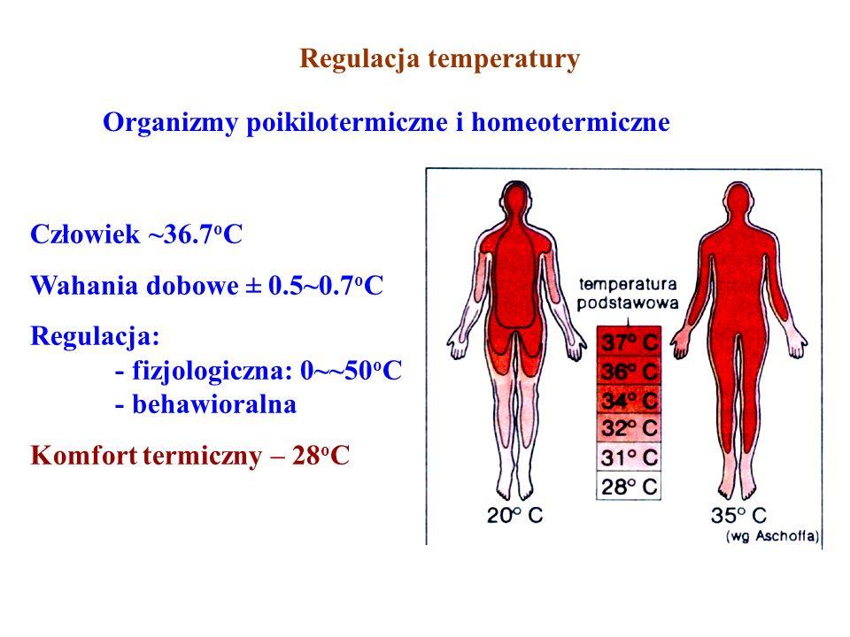 Regulacja temperatury Organizmy poikilotermiczne i homeotermiczne