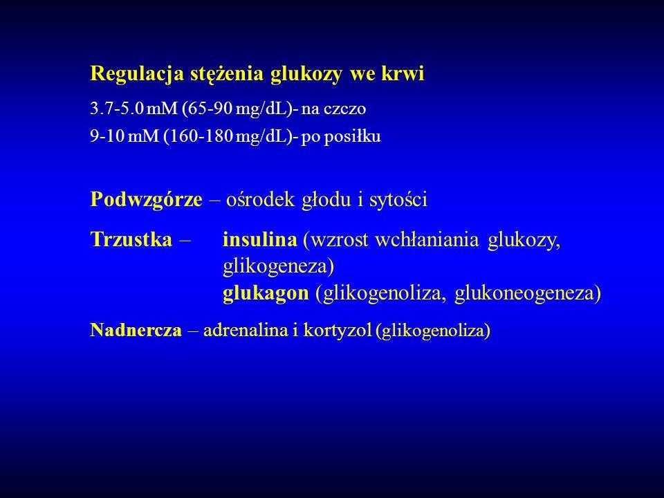 Regulacja stężenia glukozy we krwi