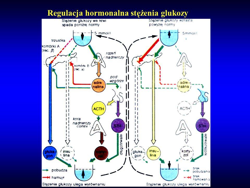Regulacja hormonalna stężenia glukozy