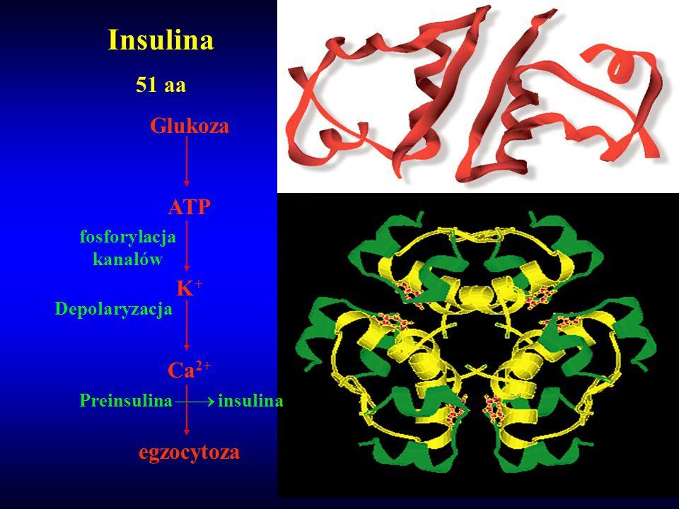 Preinsulina  insulina
