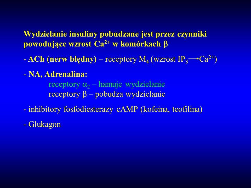 Wydzielanie insuliny pobudzane jest przez czynniki powodujące wzrost Ca2+ w komórkach b