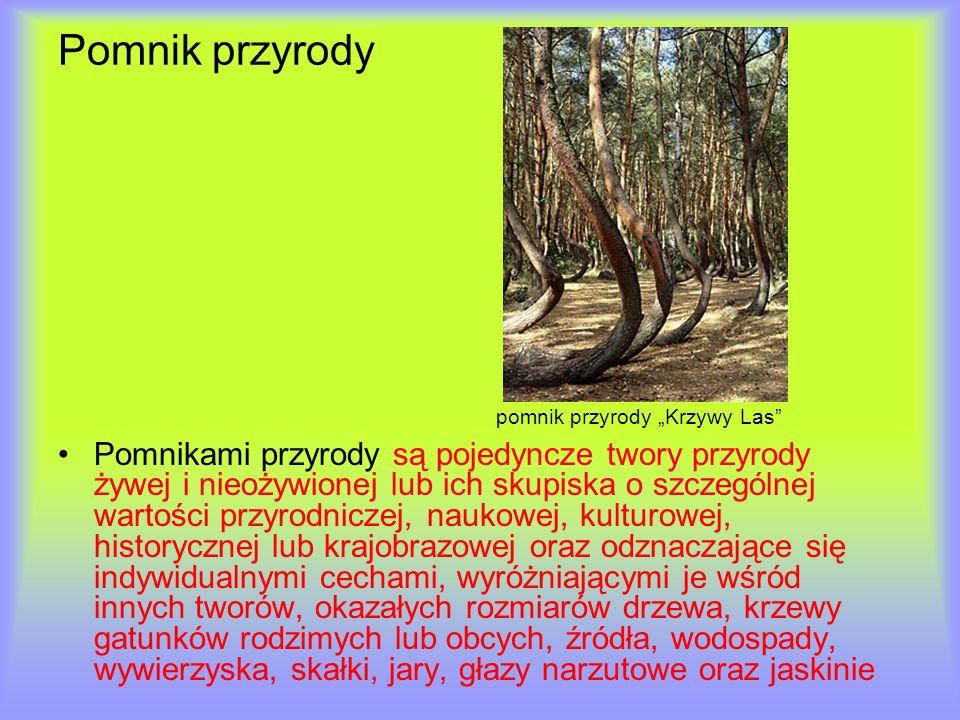 """Pomnik przyrody pomnik przyrody """"Krzywy Las"""