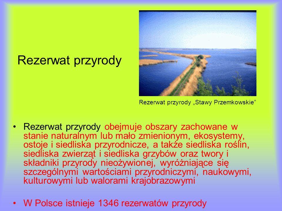 """Rezerwat przyrody Rezerwat przyrody """"Stawy Przemkowskie"""