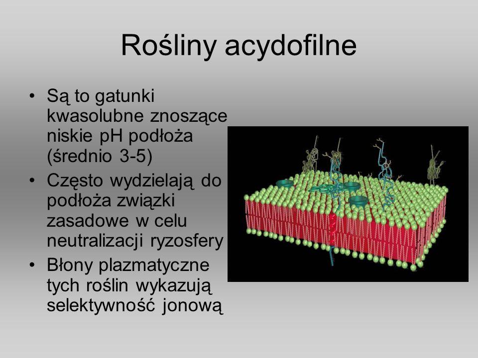 Rośliny acydofilne Są to gatunki kwasolubne znoszące niskie pH podłoża (średnio 3-5)