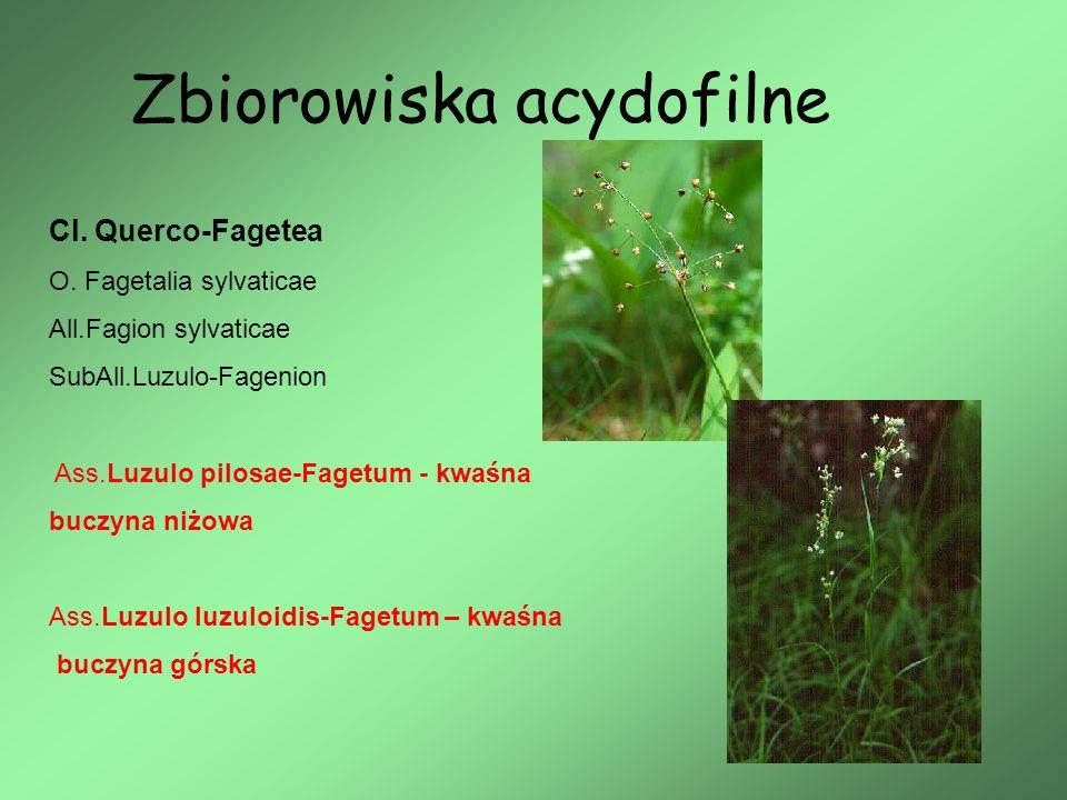 Zbiorowiska acydofilne