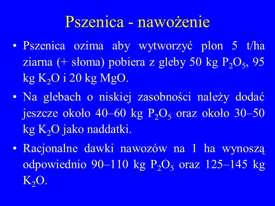 Pszenica - nawożenie Pszenica ozima aby wytworzyć plon 5 t/ha ziarna (+ słoma) pobiera z gleby 50 kg P2O5, 95 kg K2O i 20 kg MgO.