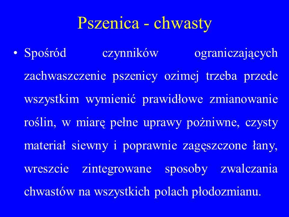 Pszenica - chwasty