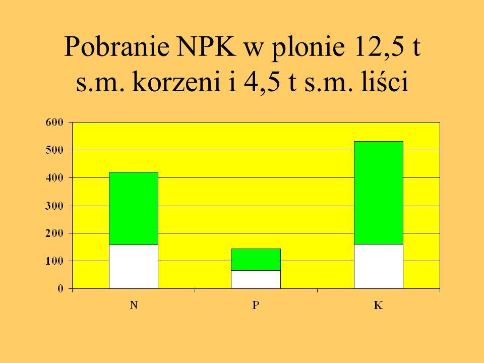 Pobranie NPK w plonie 12,5 t s.m. korzeni i 4,5 t s.m. liści