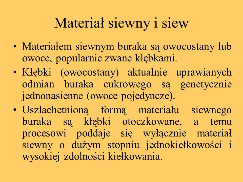 Materiał siewny i siew Materiałem siewnym buraka są owocostany lub owoce, popularnie zwane kłębkami.
