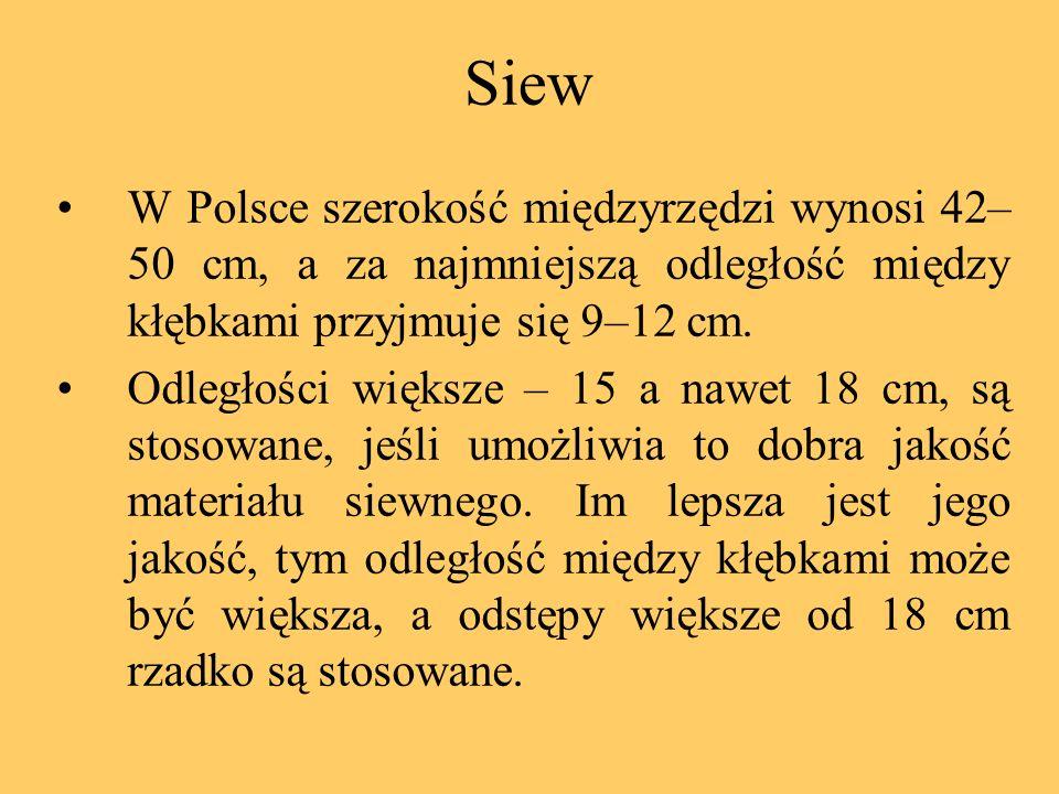 Siew W Polsce szerokość międzyrzędzi wynosi 42–50 cm, a za najmniejszą odległość między kłębkami przyjmuje się 9–12 cm.